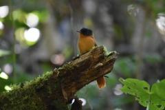 Paradise Bird Madagascar